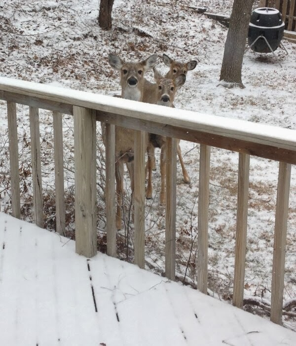 Funny animals of the week - 3 January 2014 (40 pics), three wild deers