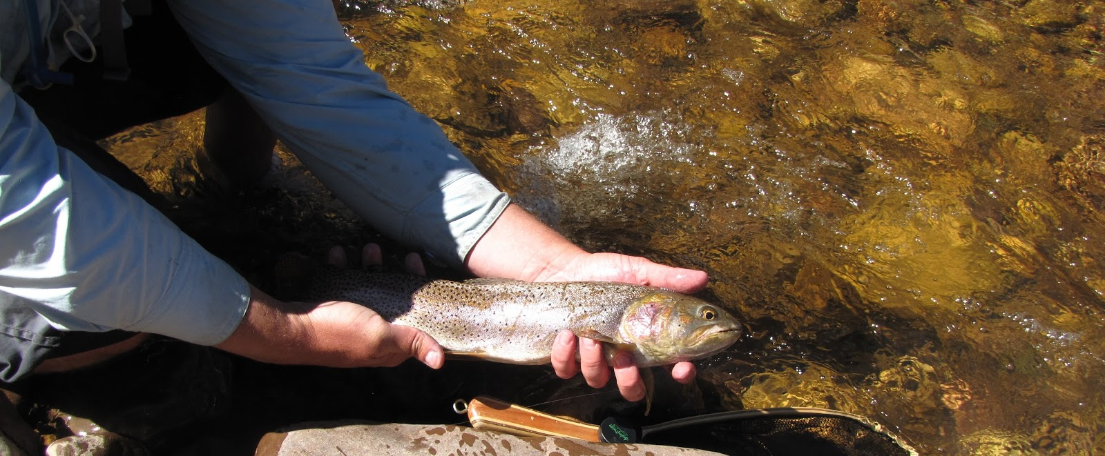 Provo river fly guy year round fishing blog upper provo for Provo river fishing report