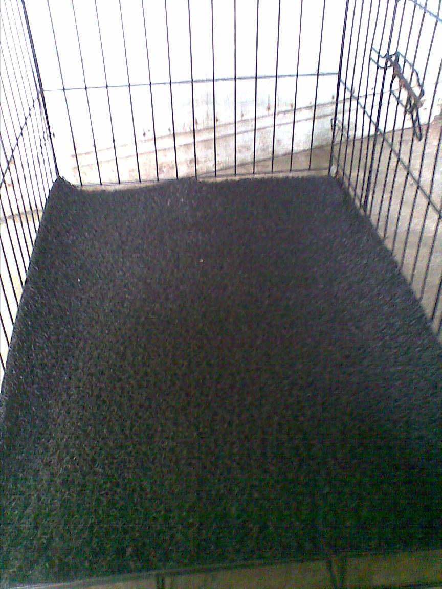 Keselesaan Cage Kucing My Corner