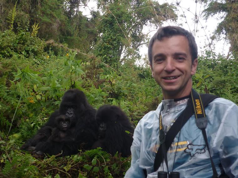 Últimos gorilas de montaña del planeta
