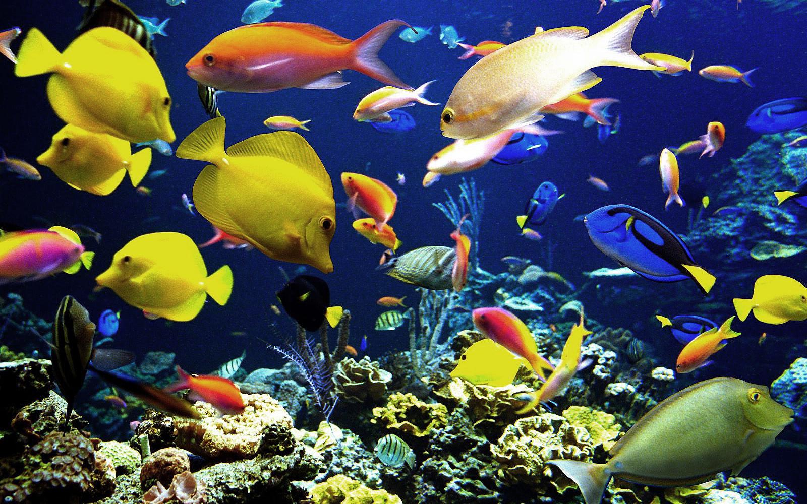 Diverse kleuren tropische vissen   Bureaublad Achtergronden