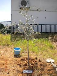 Plantamos nuestro árbol, promoción 2.003-2012