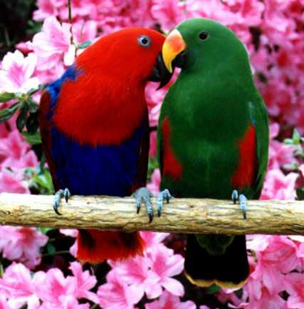 Beautiful Love Birds 6
