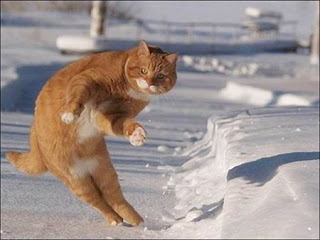 Funny Cat Enjoying In Holidays In Ice Mountain