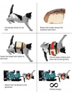 cat funny photo image energy source infinite science