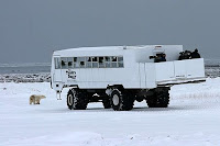 Tundra-Buggy in Churchill