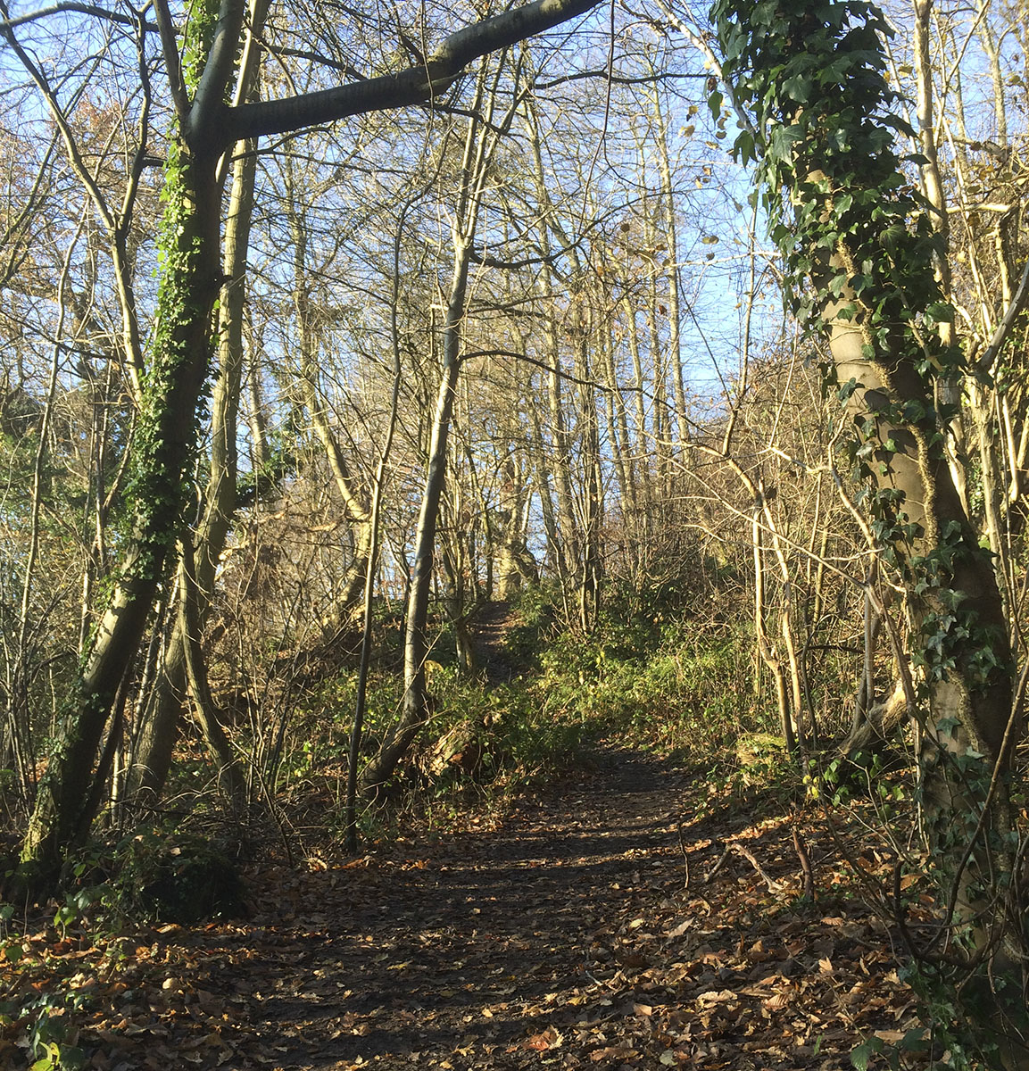 Looking up along the path towards One Tree Hill, 11 December 2012.