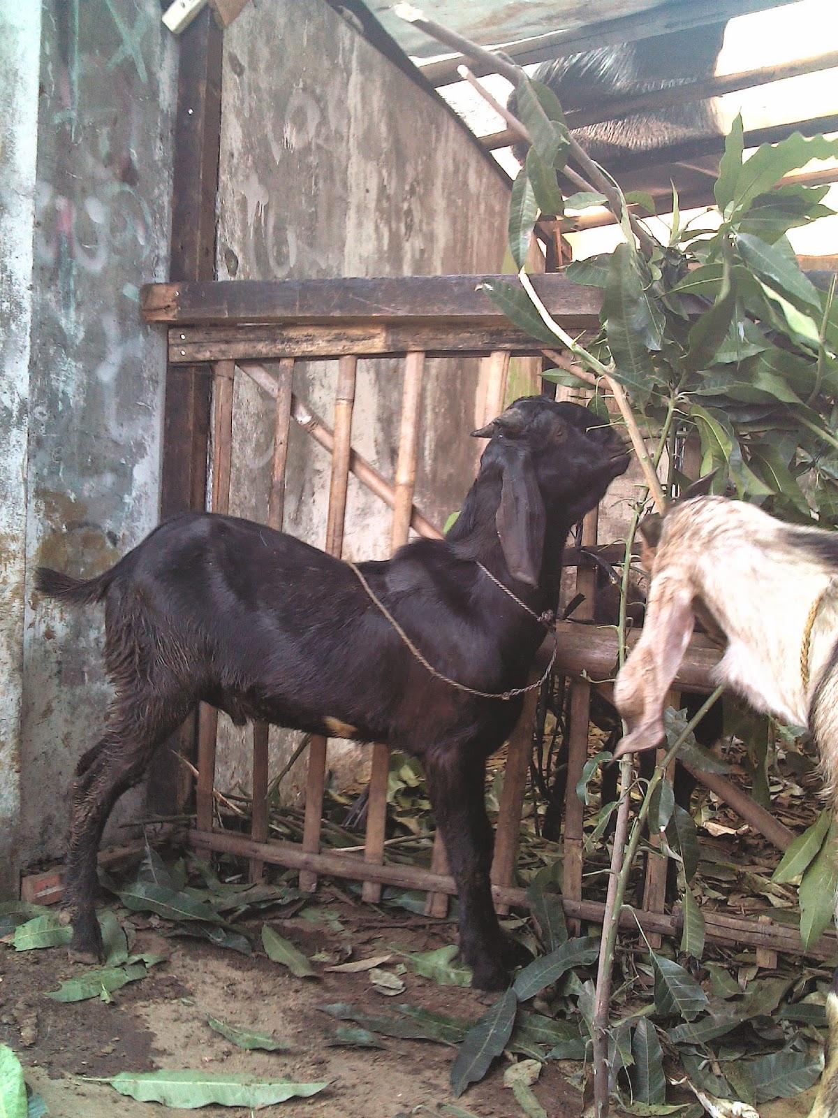 http://pusatlayananaqiqah.blogspot.com