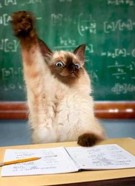 Я тоже хочу учиться!