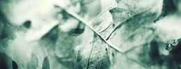 http://i757.photobucket.com/albums/xx217/carllton_grapix/blogtexturecarllton28.jpg