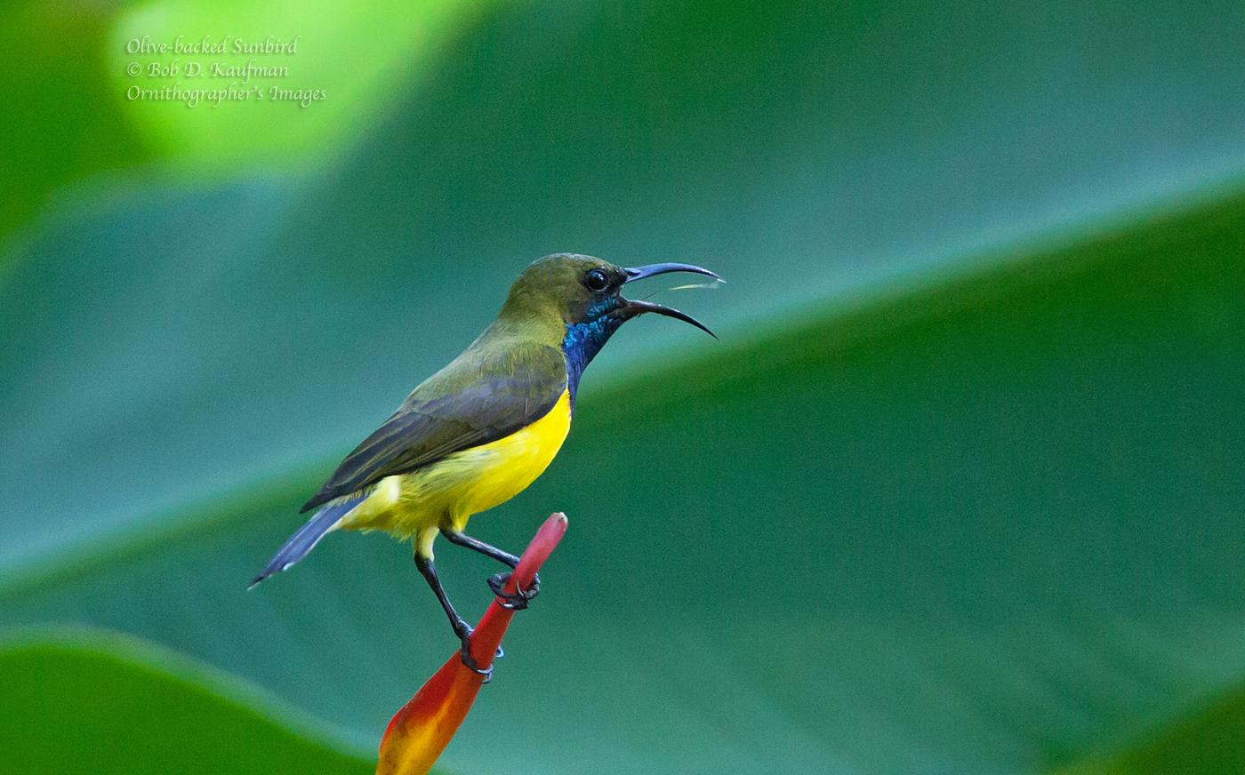 Wonderful wildlife: Birds and bees
