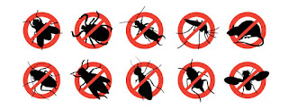 Cara Alami dan Terbaru Membasmi Nyamuk, Tikus, Semut dan Kecoa