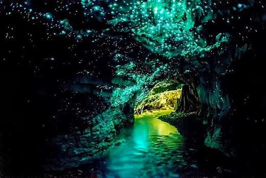 Glowworm Caves in Waitomo, New Zealand