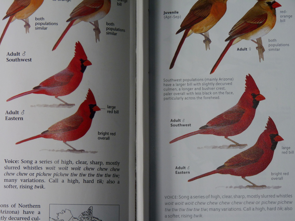 sibley guide to birds second edition