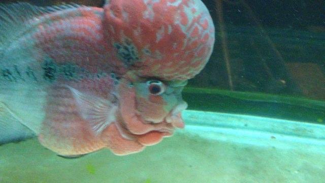 fish brain - photo #10
