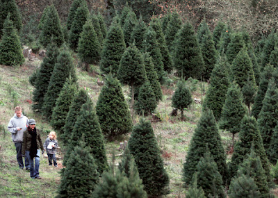 Christmas Tree Farm wallpapers