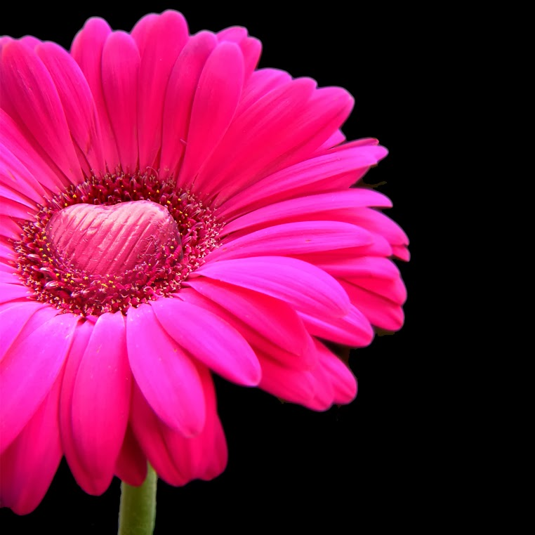 Pink Flower Daisy Heart Love