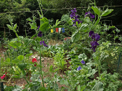 August '11 PacNW garden