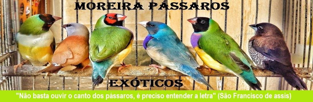 ***MOREIRA PÁSSAROS EXÓTICOS***