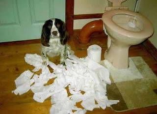 Cão desfaz papel higiénico