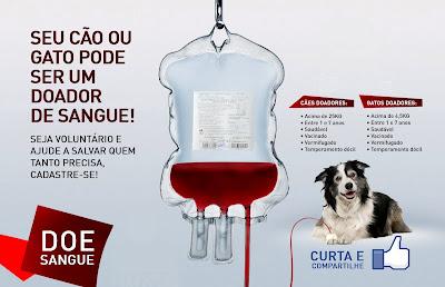 cão doador de sangue