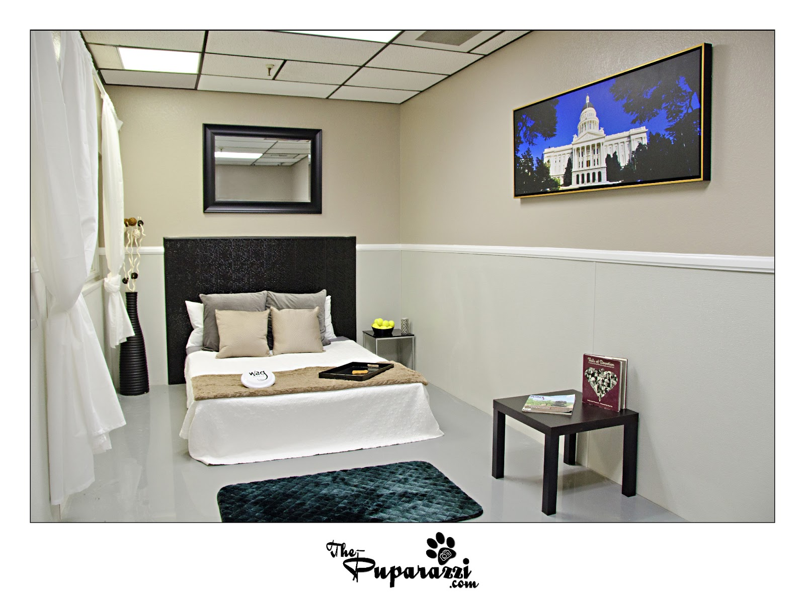 Photoshoot For Wag Hotel Sacramento Capitol Suite