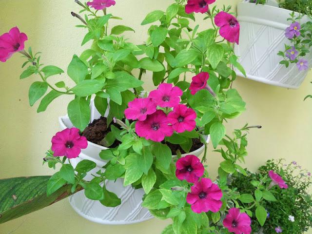Chậu trồng hoa ốp tường với trồng hoa