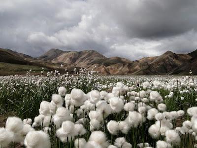 2011 Best Wallpapers Cotton Gross