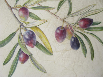Olea europea, olive painting on vellum Shevaun Doherty