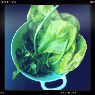 Fresh from the garden for taco toppings: cilantro, lettuce, and a garlic scape. || The Graffitied Gardenia