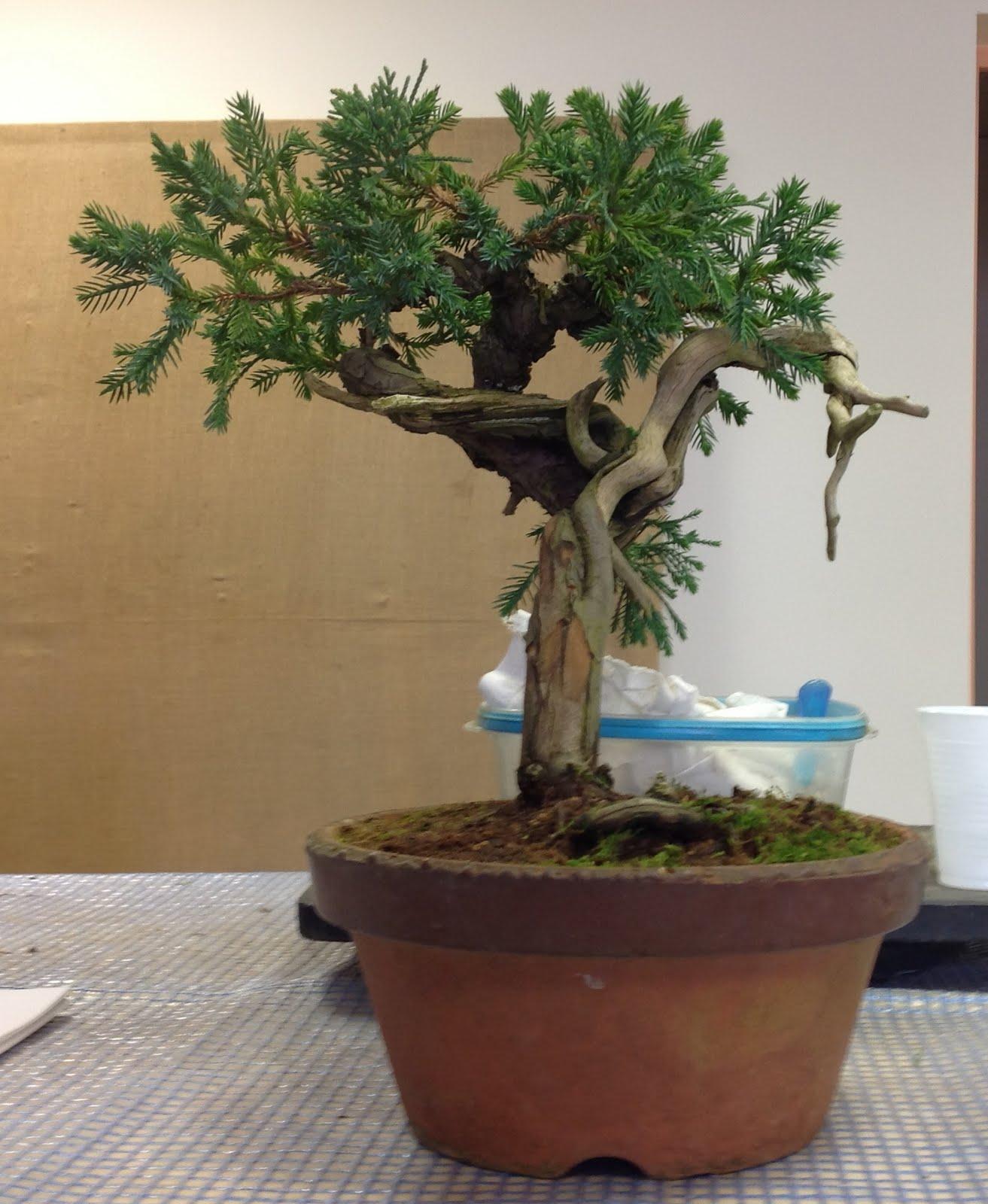 Saruyama Blog March 2013