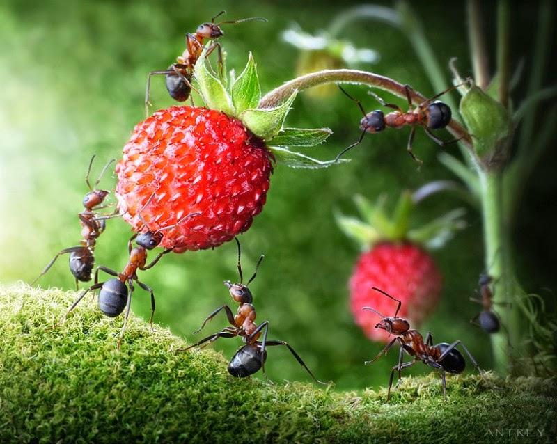 Ещё раз простили муравьи ленивого брата, накормили.