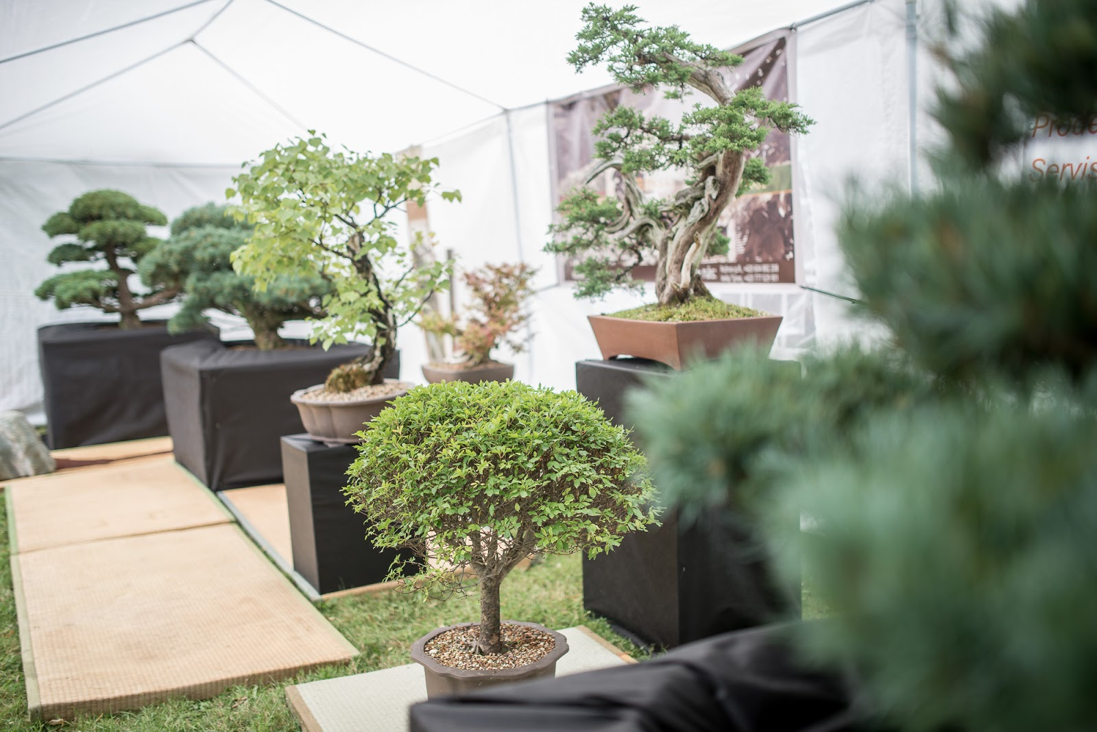 Bonsai Moravia Blog REPORT FROM COLOURS OF OSTRAVA STREET FESTIVAL