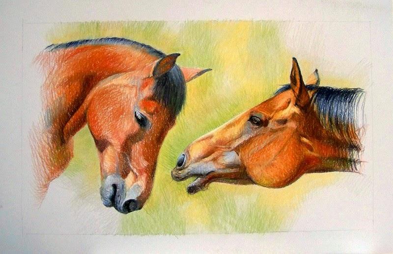 Pferdeportrait Zeichnung Schritt 3
