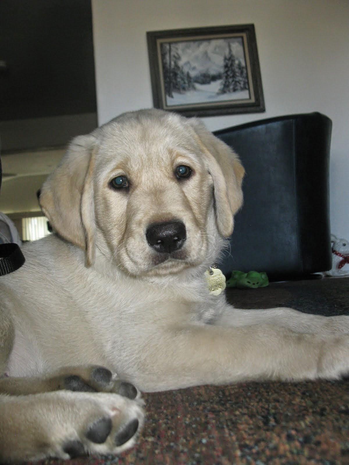 Puppy #5 Roland