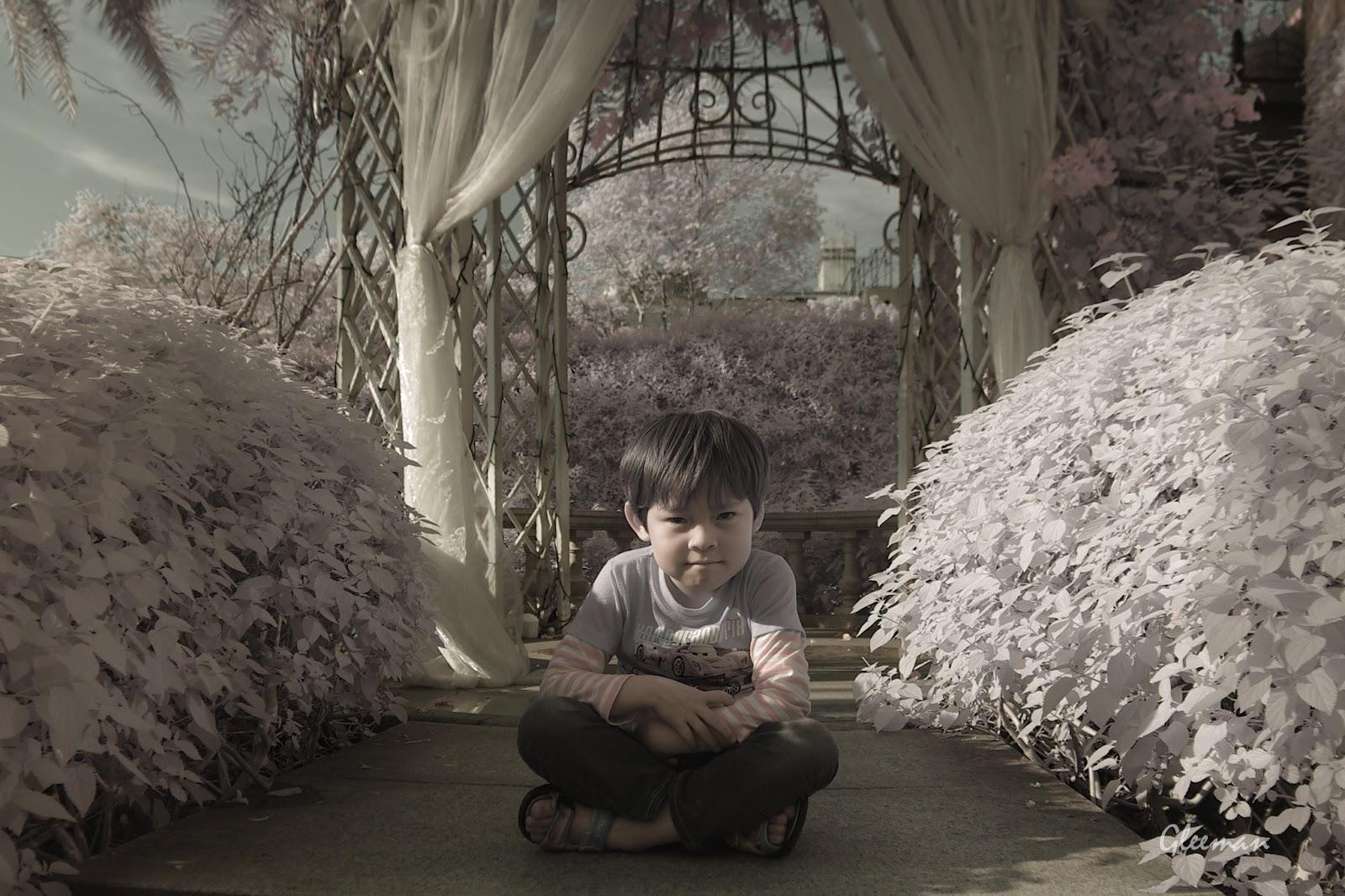 彩色紅外線攝影 (Pentax K5 Color IR ),在維多麗亞漂亮的花棚。