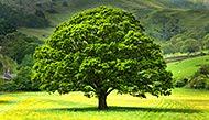 Salvaţi Pădurile României !