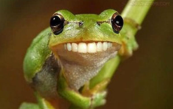 Resultado de imagen para rana sonriendo