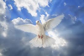 Paloma de la paz y la libertad