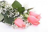 Aos visitantes... rosas para vocês
