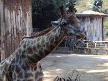 Zoo de SP