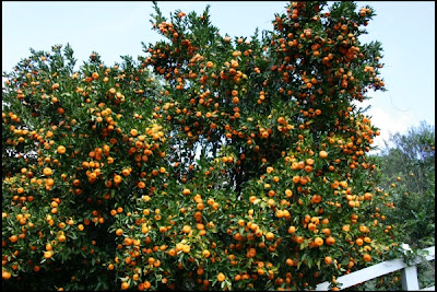 The arid arborist fruit trees for a mediterranean climate - Fruit trees every type weather area ...