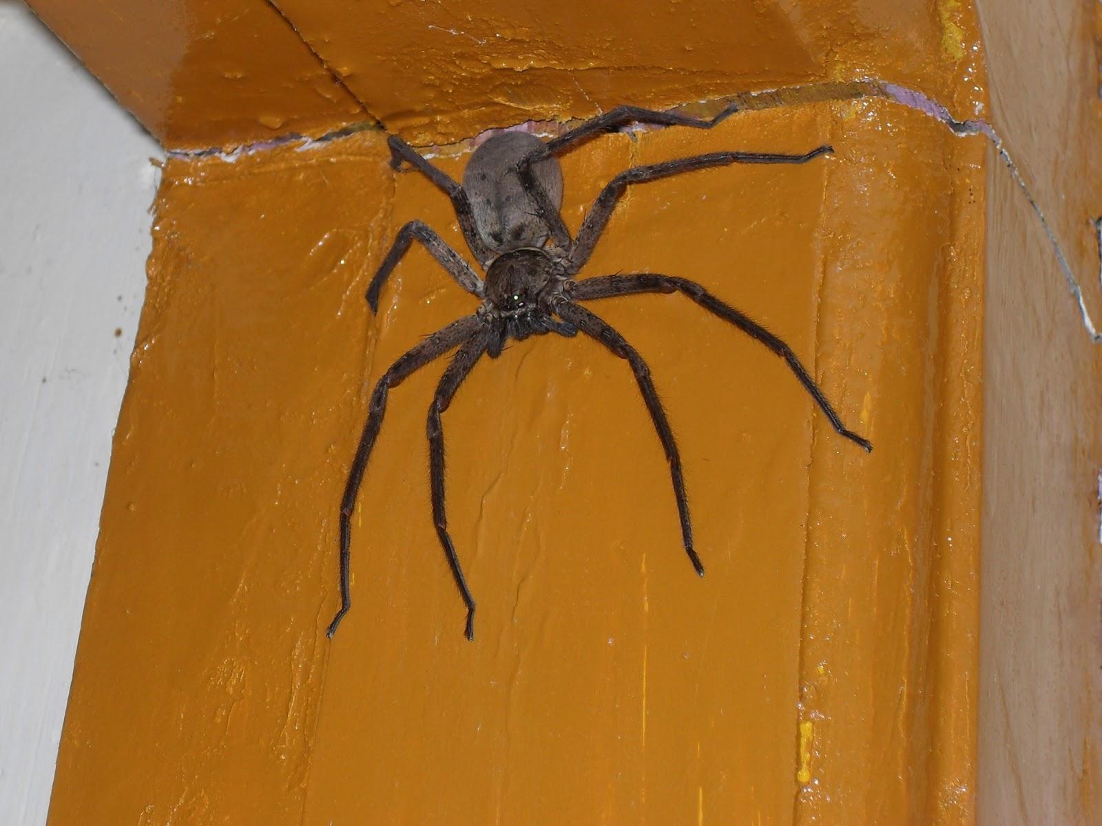 к чему снится большой черный паук в кровати
