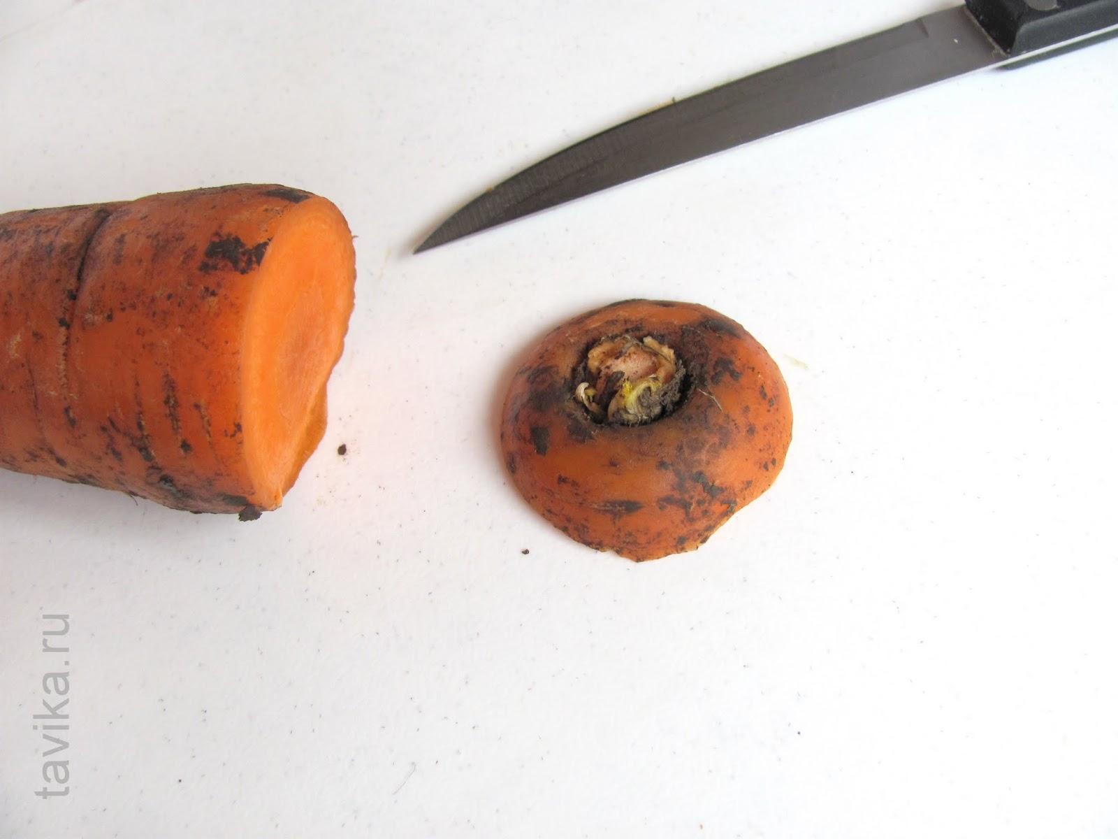 опыты с морковкой