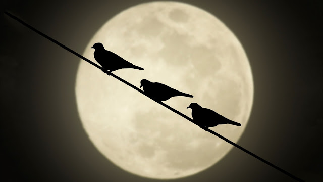 Moon Birds HD Wallpaper
