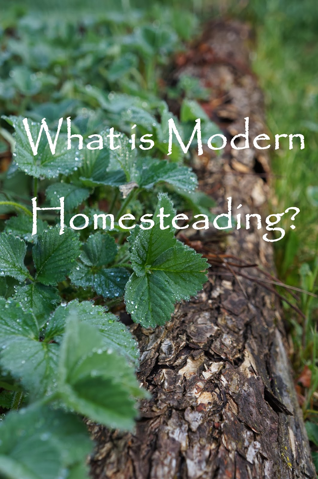 The backyard farming connection what is modern homesteading for Modern homesteading