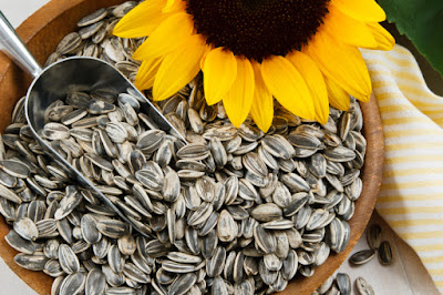 The best seed to treat migraine