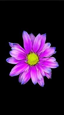 Flower wallpaper for iphone