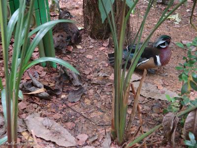 Jurong Bird Park Random Photo 11