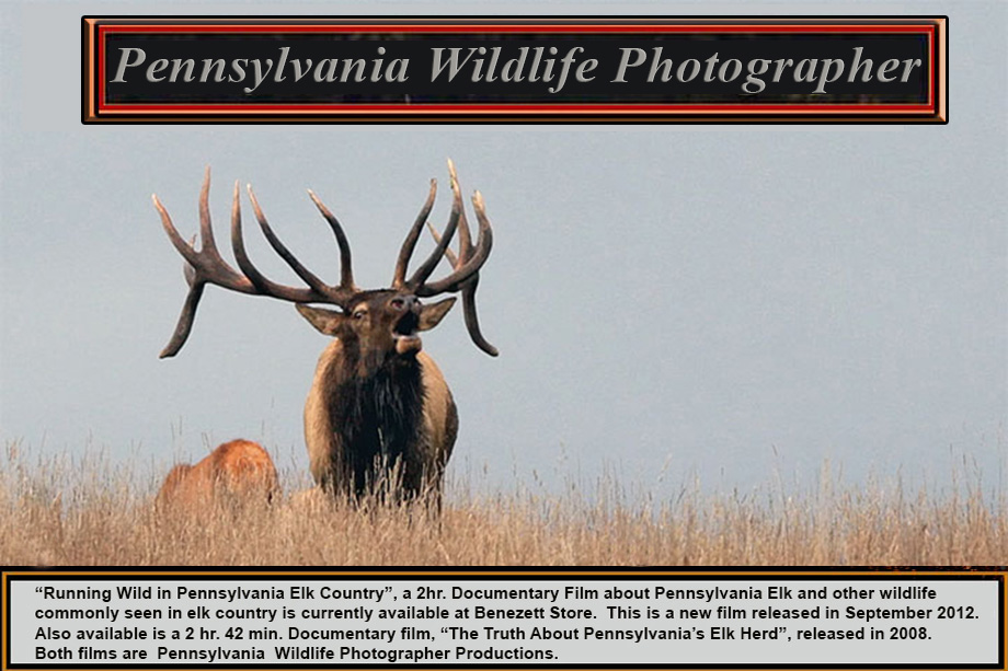Pennsylvania Wildlife Photographer